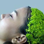 Как приготовить маску для волос из авокадо?
